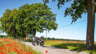 Die Heiden von Kummerow – Eine Reise an die Mecklenburgische Seenplatte